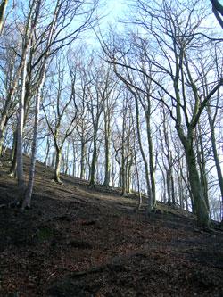 Meersbrook tree day